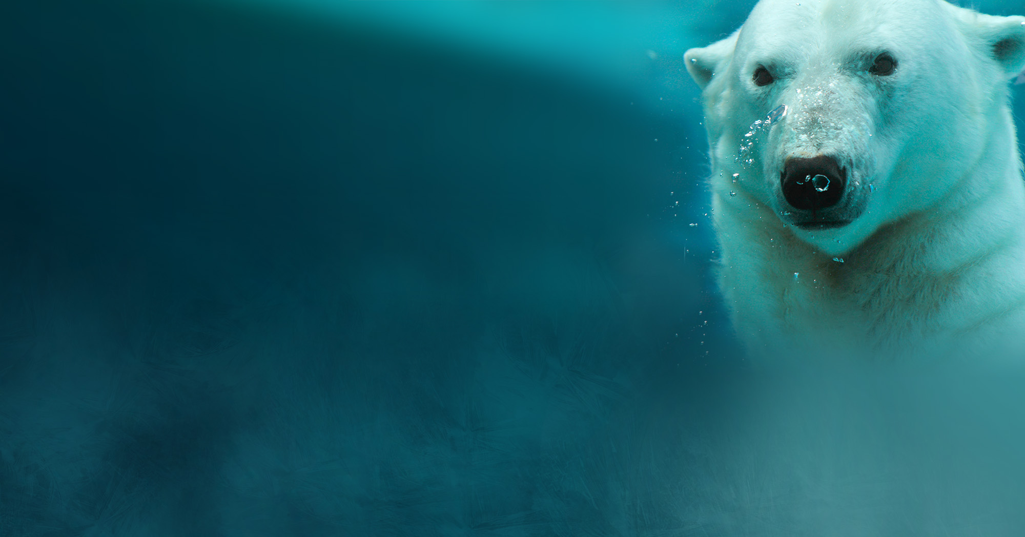 Homepage Polar Bear Background Image